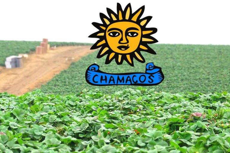 CHAMACOs Logo in Field