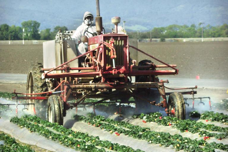 Pesticide Spray on Strawberries